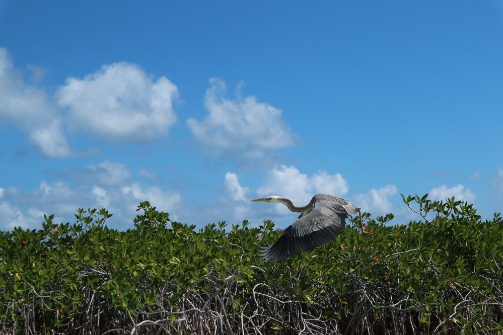 Réserve du sian kaan mexique yucatan blog voyage
