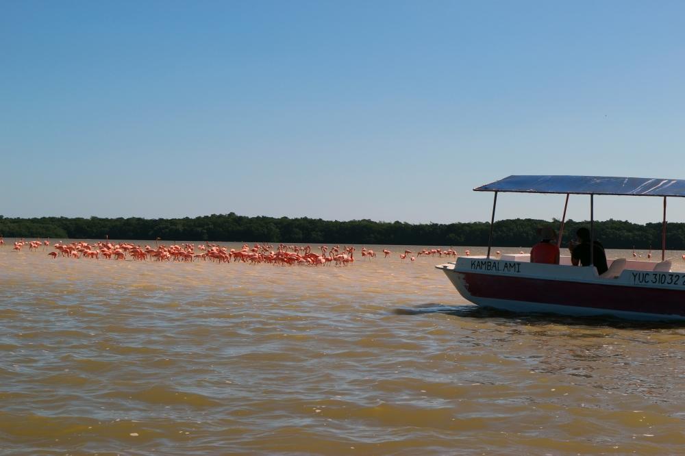 Celestun flamands roses Merida mexique blog voyage yucatan itineraire